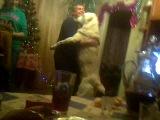(Прикол с собакой) Собака хочет танцевать, как русские отмечают новый год))